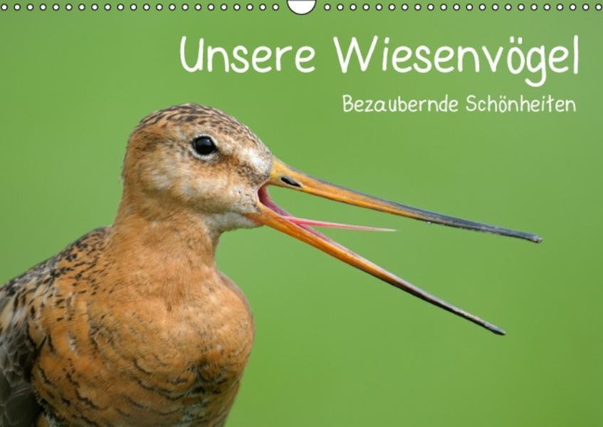 Unsere Wiesenvögel - Bezaubernde Schönheiten (Wandkalender 2017 DIN A3 quer) - Coverbild
