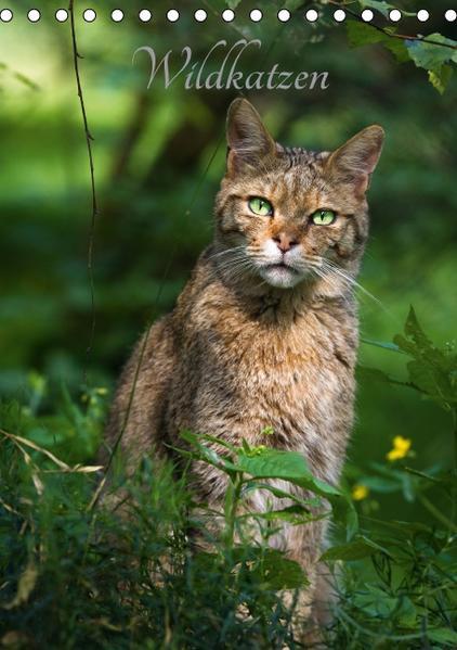 Wildkatzen - scheue Jäger (Tischkalender 2017 DIN A5 hoch) - Coverbild