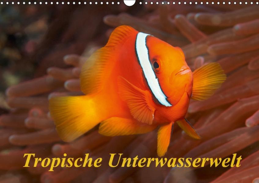 Tropische Unterwasserwelt (Wandkalender 2017 DIN A3 quer) - Coverbild