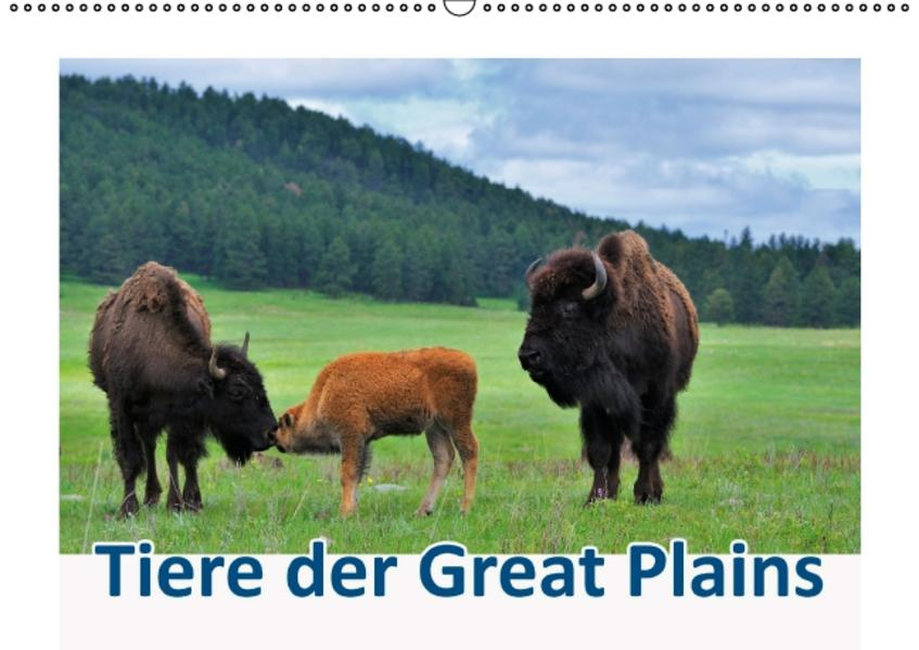Tiere der Great Plains (Wandkalender 2017 DIN A2 quer) - Coverbild