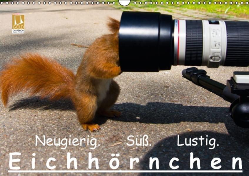 Eichhörnchen (Wandkalender 2017 DIN A3 quer) - Coverbild