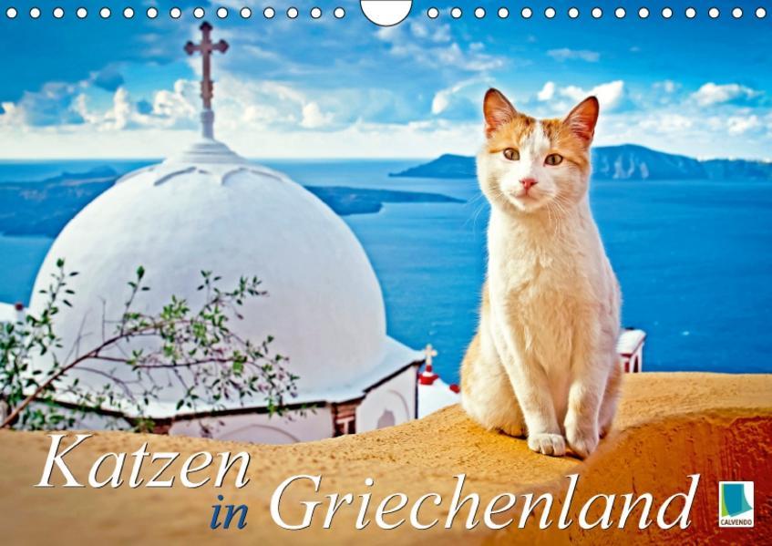 Katzen in Griechenland (Wandkalender 2017 DIN A4 quer) - Coverbild