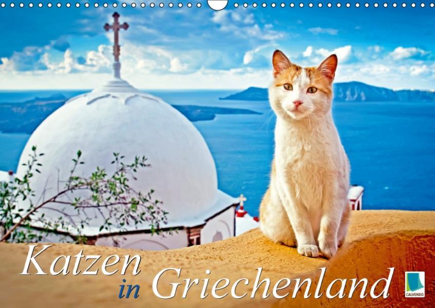 Katzen in Griechenland (Wandkalender 2017 DIN A3 quer) - Coverbild