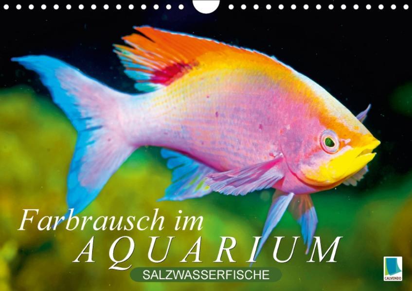 Farbrausch im Aquarium: Salzwasserfische (Wandkalender 2017 DIN A4 quer) - Coverbild