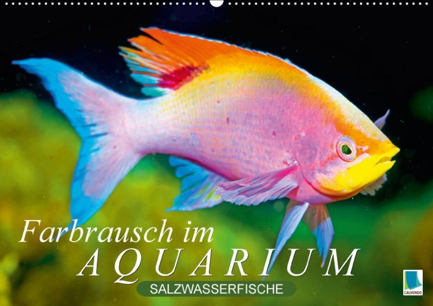 Farbrausch im Aquarium: Salzwasserfische (Wandkalender 2017 DIN A2 quer) - Coverbild
