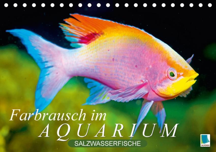 Farbrausch im Aquarium: Salzwasserfische (Tischkalender 2017 DIN A5 quer) - Coverbild