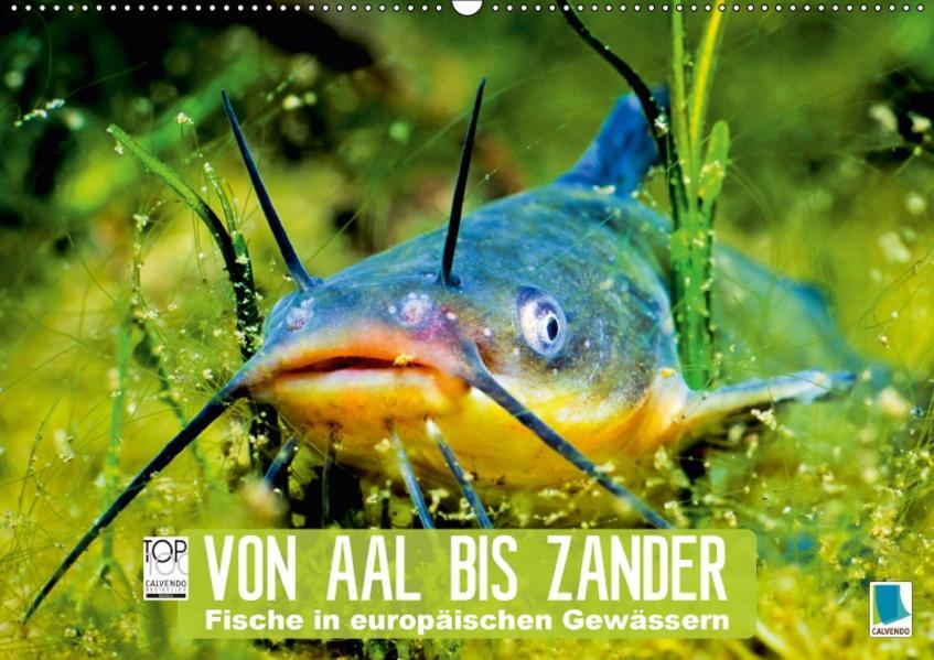Von Aal bis Zander: Fische in europäischen Gewässern (Wandkalender 2017 DIN A2 quer) - Coverbild