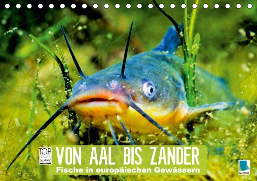 Von Aal bis Zander: Fische in europäischen Gewässern (Tischkalender 2017 DIN A5 quer) - Coverbild