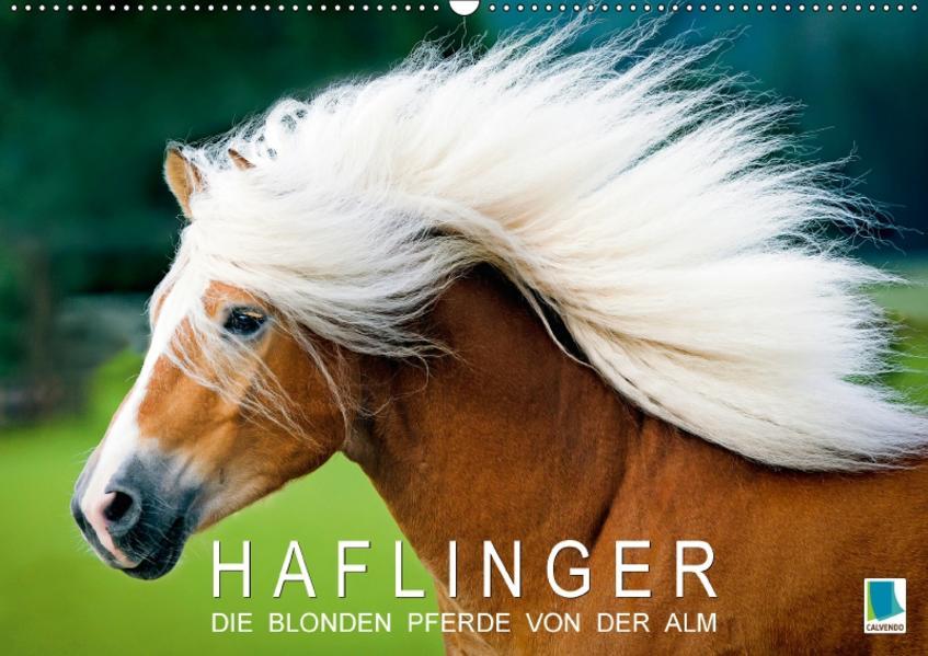 Haflinger: Die blonden Pferde von der Alm (Wandkalender 2017 DIN A2 quer) - Coverbild
