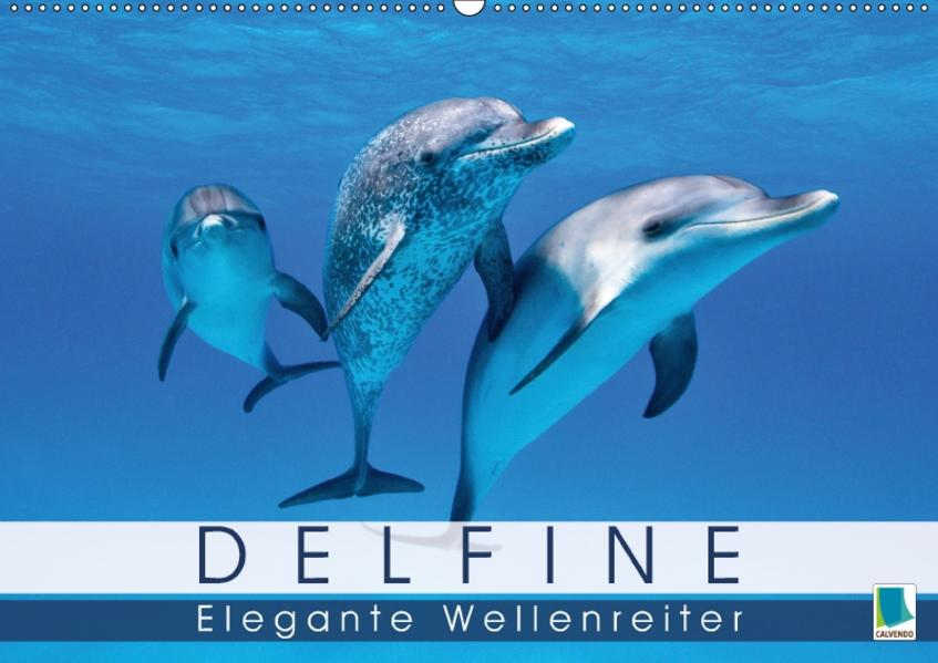 Delfine: Elegante Wellenreiter (Wandkalender 2017 DIN A2 quer) - Coverbild