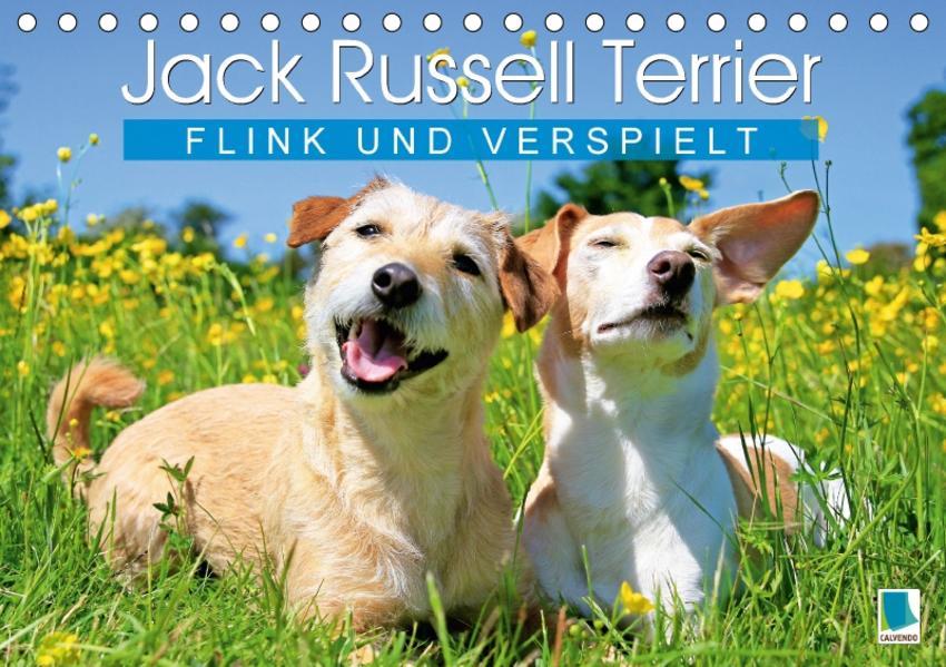 Jack Russell Terrier: flink und verspielt (Tischkalender 2017 DIN A5 quer) - Coverbild