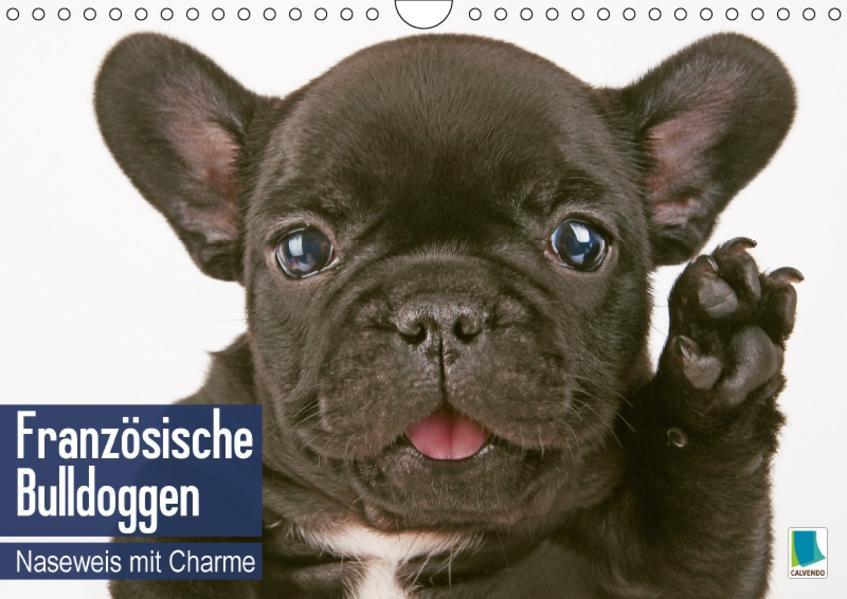 Französische Bulldoggen: Naseweis mit Charme (Wandkalender 2017 DIN A4 quer) - Coverbild