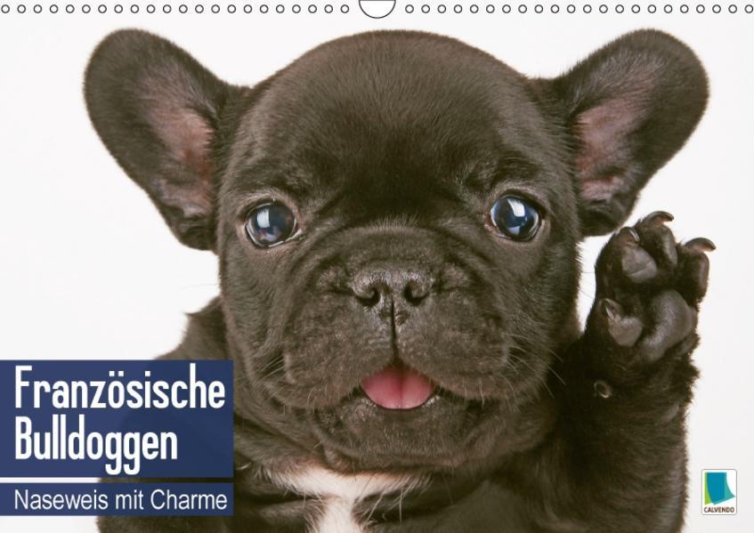 Französische Bulldoggen: Naseweis mit Charme (Wandkalender 2017 DIN A3 quer) - Coverbild