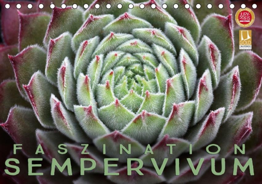 Faszination Sempervivum (Tischkalender 2017 DIN A5 quer) - Coverbild
