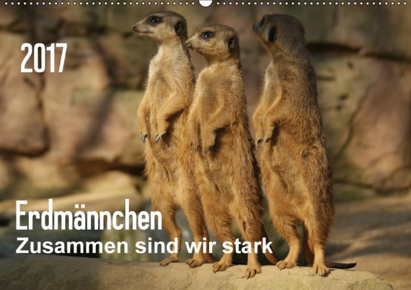 Erdmännchen – Zusammen sind wir stark (Wandkalender 2017 DIN A2 quer) - Coverbild