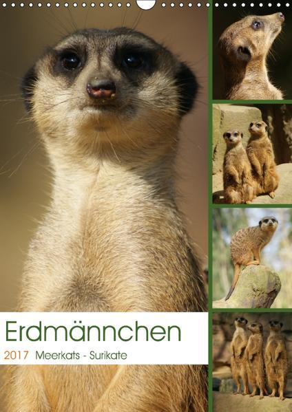 Erdmännchen-Meerkats-Surikate (Wandkalender 2017 DIN A3 hoch) - Coverbild