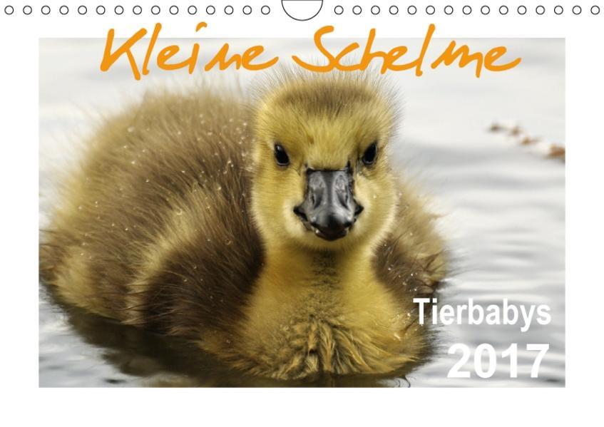 Kleine Schelme - Tierbabys (Wandkalender 2017 DIN A4 quer) - Coverbild