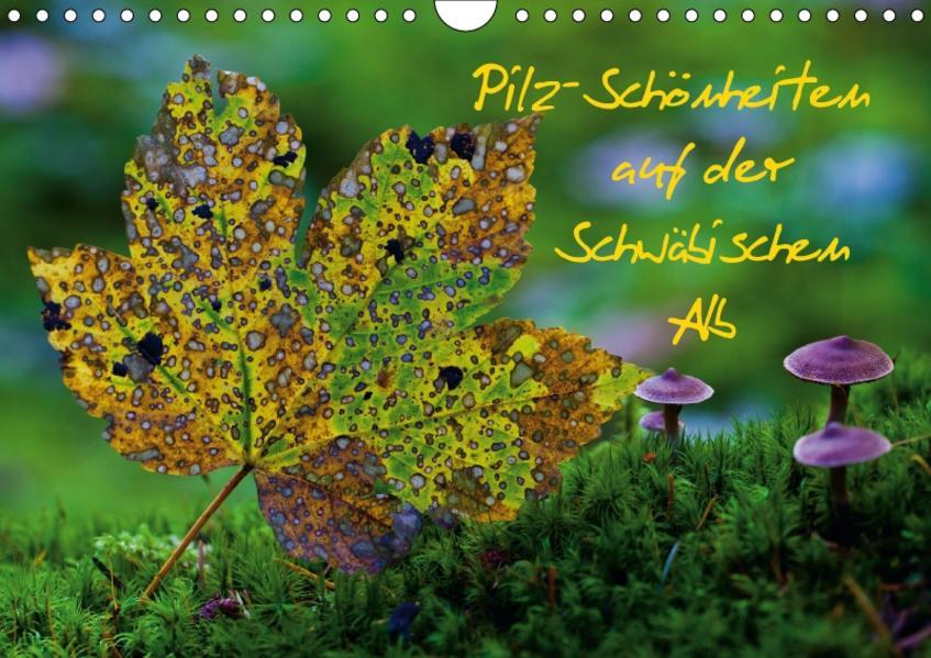 Pilz-Schönheiten auf der Schwäbischen Alb (Wandkalender 2017 DIN A4 quer) - Coverbild