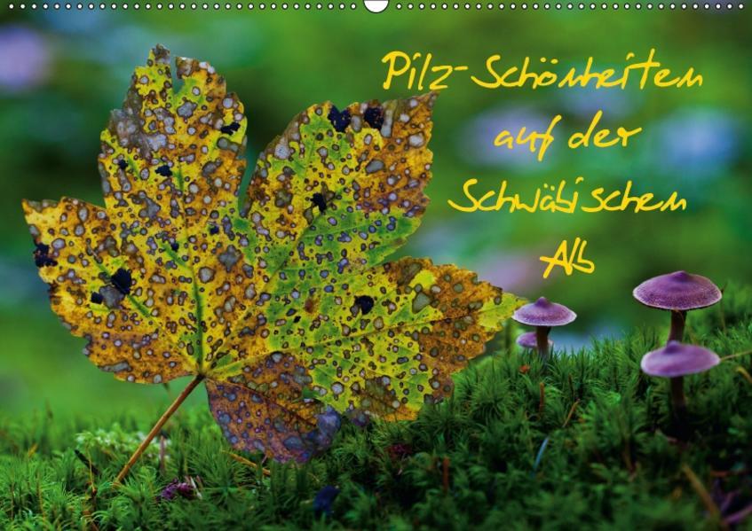 Pilz-Schönheiten auf der Schwäbischen Alb (Wandkalender 2017 DIN A2 quer) - Coverbild