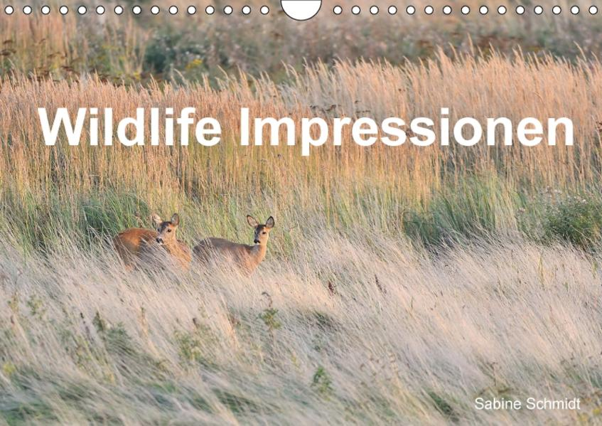 Wildlife Impressionen (Wandkalender 2017 DIN A4 quer) - Coverbild