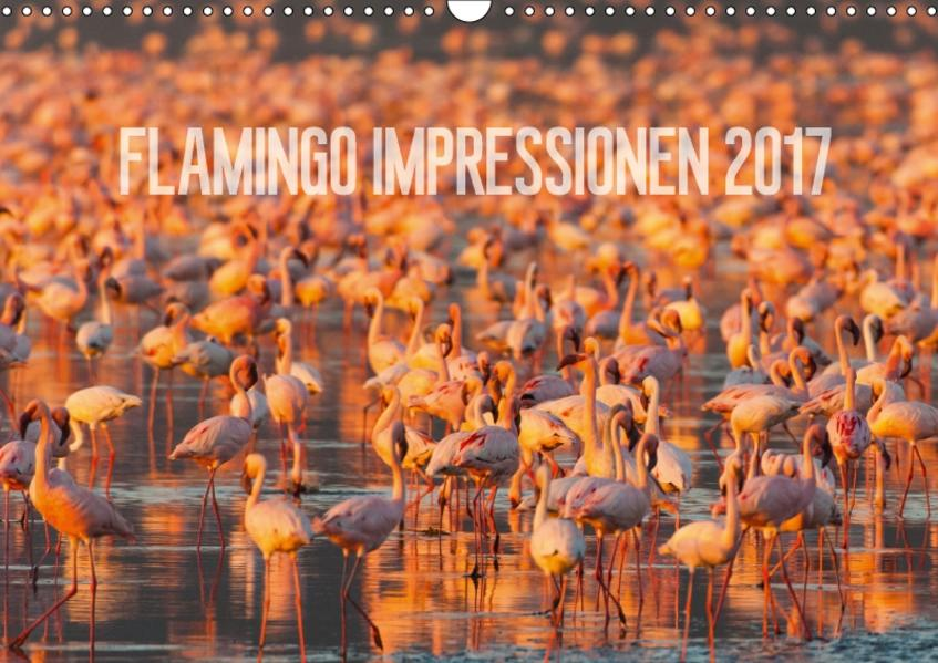 Flamingo Impressionen 2017 (Wandkalender 2017 DIN A3 quer) - Coverbild