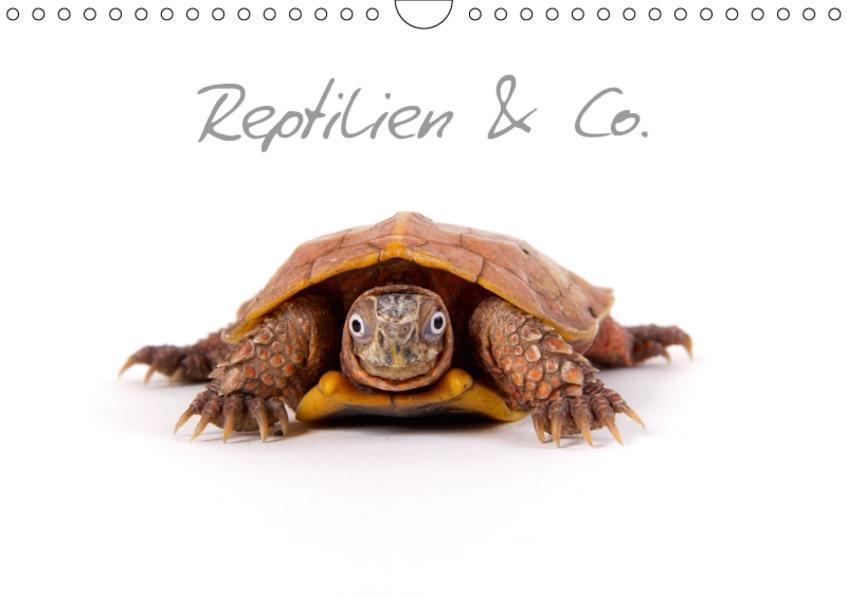 Reptilien & Co. (Wandkalender 2017 DIN A4 quer) - Coverbild