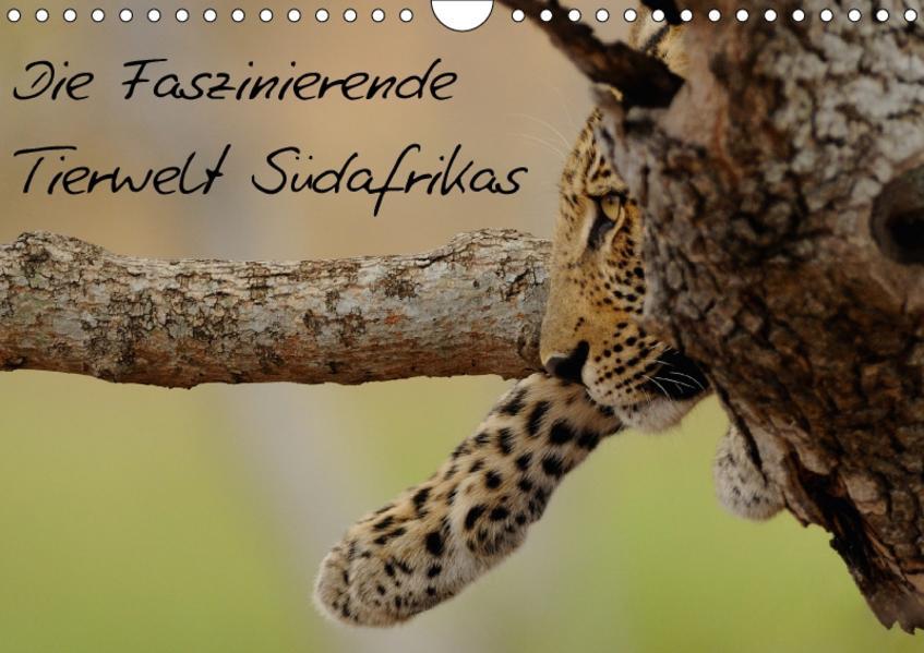 Die Faszinierende Tierwelt Südafrikas (Wandkalender 2017 DIN A4 quer) - Coverbild