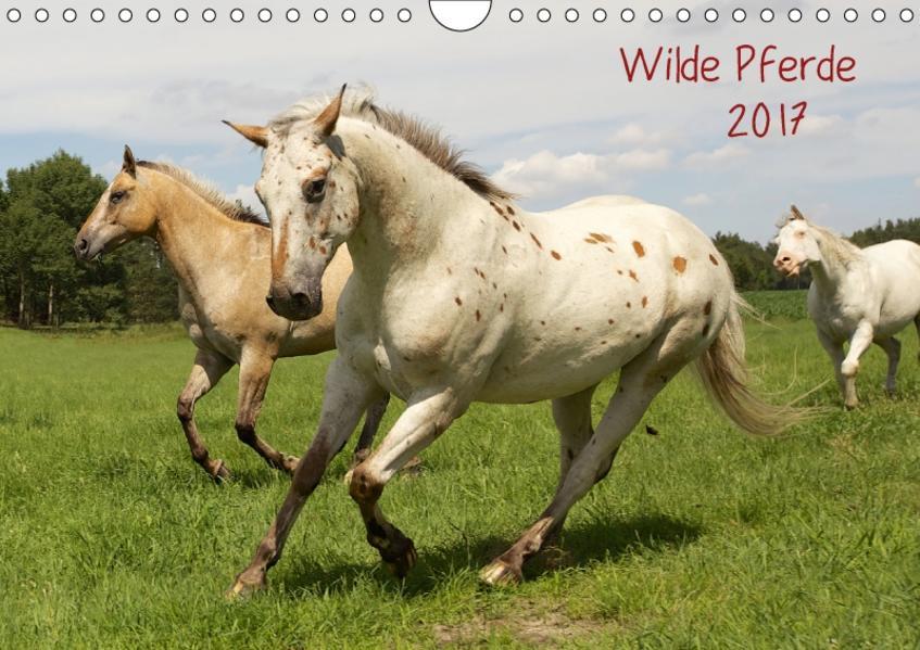 Wilde Pferde (Wandkalender 2017 DIN A4 quer) - Coverbild