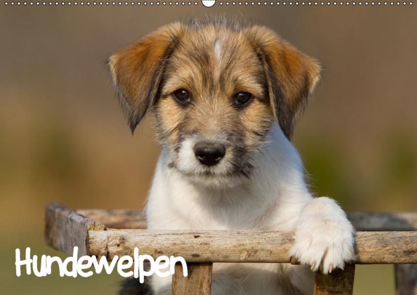 Hundewelpen (Wandkalender 2017 DIN A2 quer) - Coverbild