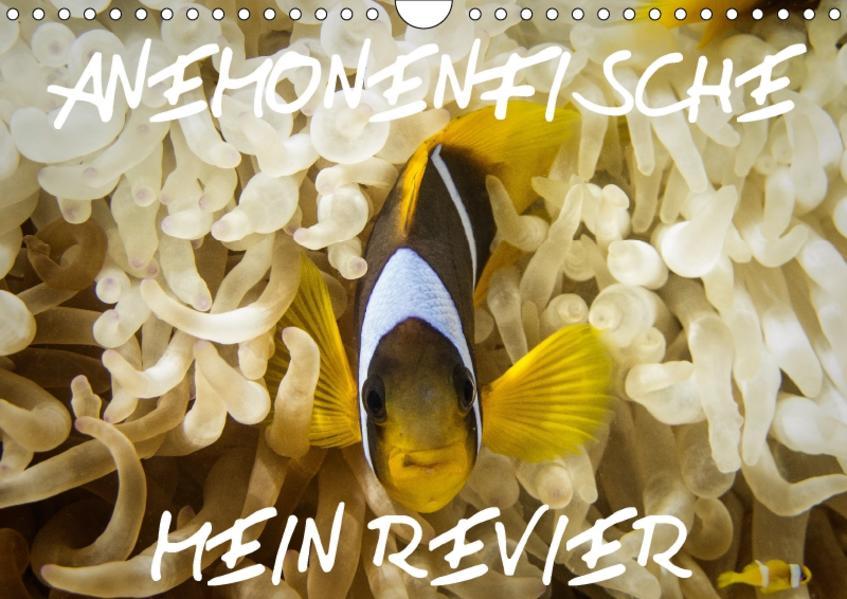 Anemonenfische, Mein Revier. (Wandkalender 2017 DIN A4 quer) - Coverbild