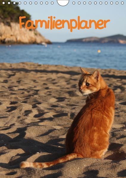 Familienplaner Katzen (Wandkalender 2017 DIN A4 hoch) - Coverbild