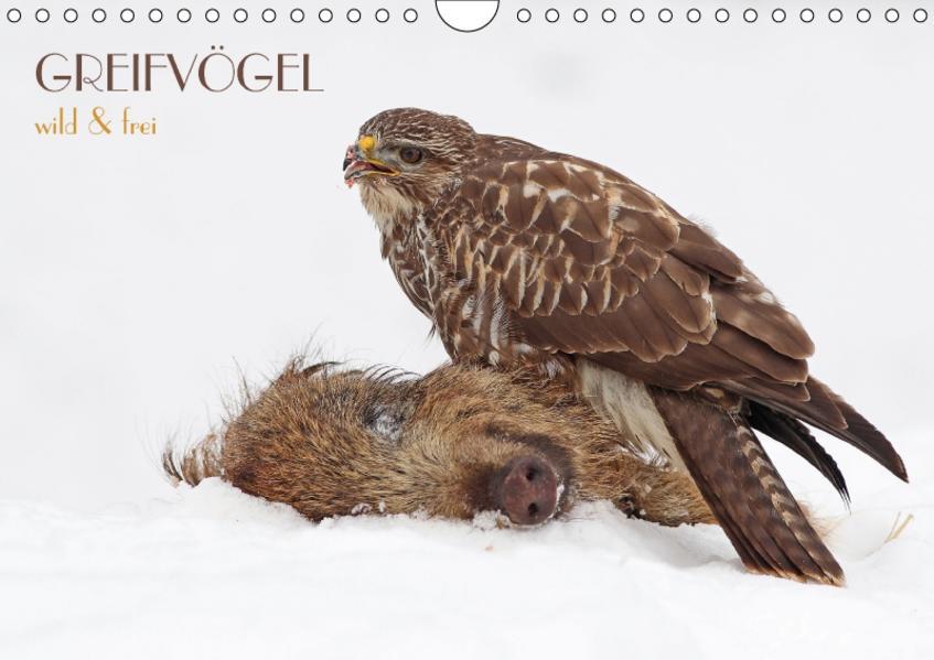 GREIFVÖGEL wild & frei (Wandkalender 2017 DIN A4 quer) - Coverbild