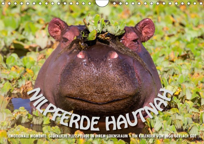 Emotionale Momente: Nilpferde hautnah (Wandkalender 2017 DIN A4 quer) - Coverbild