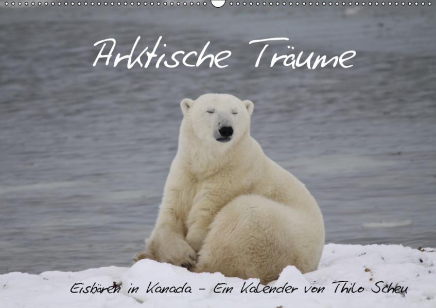 Arktische Träume - Eisbären in Kanada (Wandkalender 2017 DIN A2 quer) - Coverbild