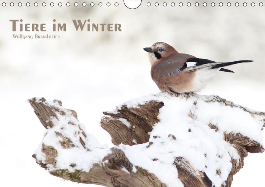 Tiere im Winter (Wandkalender 2017 DIN A4 quer) - Coverbild