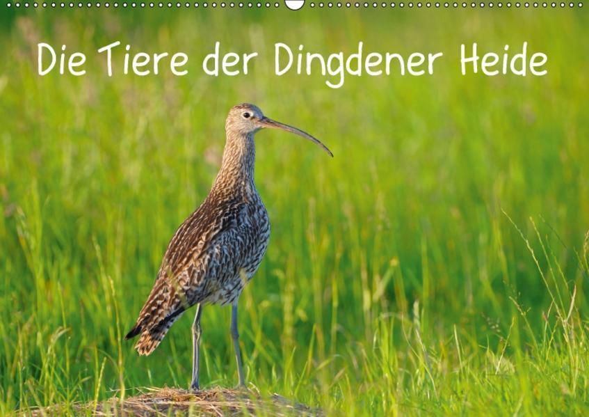 Die Tiere der Dingdener Heide (Wandkalender 2017 DIN A2 quer) - Coverbild