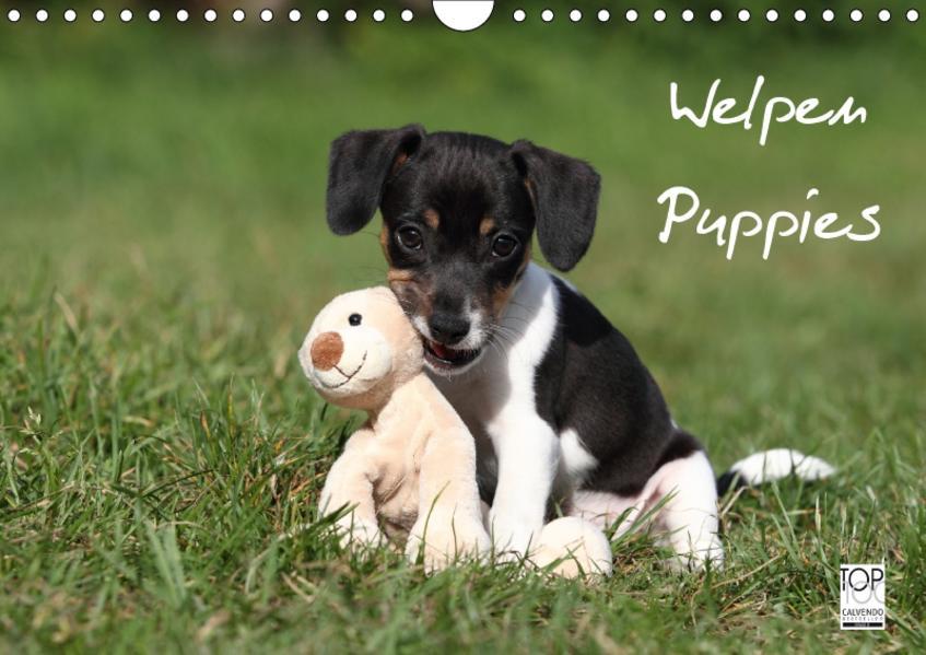 Welpen - Puppies (Wandkalender 2017 DIN A4 quer) - Coverbild