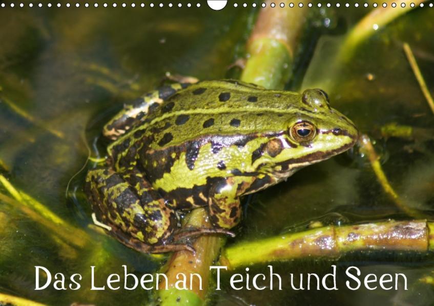 Das Leben an Teich und Seen (Wandkalender 2017 DIN A3 quer) - Coverbild