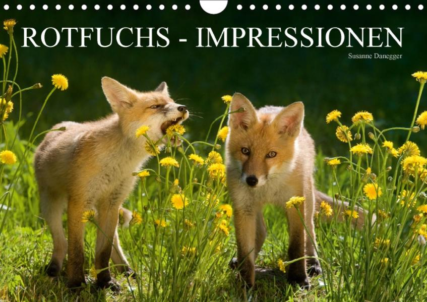 Rotfuchs - Impressionen (Wandkalender 2017 DIN A4 quer) - Coverbild