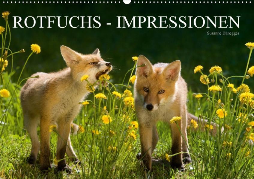 Rotfuchs - Impressionen (Wandkalender 2017 DIN A2 quer) - Coverbild