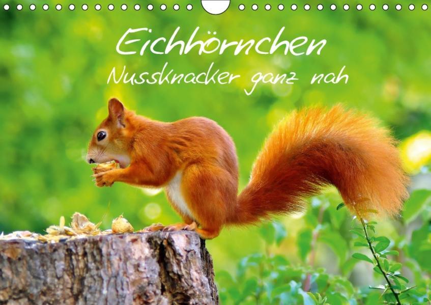 Eichhörnchen-Nussknacker ganz nah (Wandkalender 2017 DIN A4 quer) - Coverbild