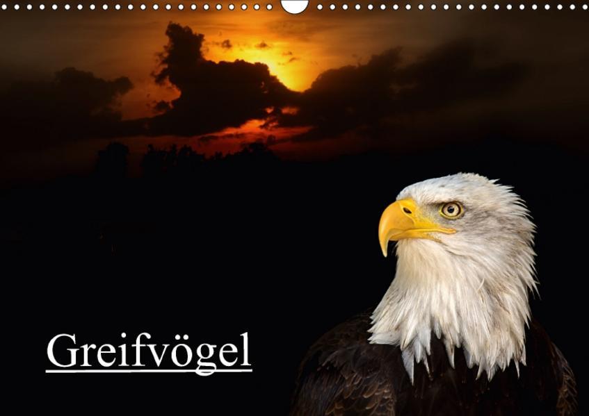 Greifvögel (Wandkalender 2017 DIN A3 quer) - Coverbild