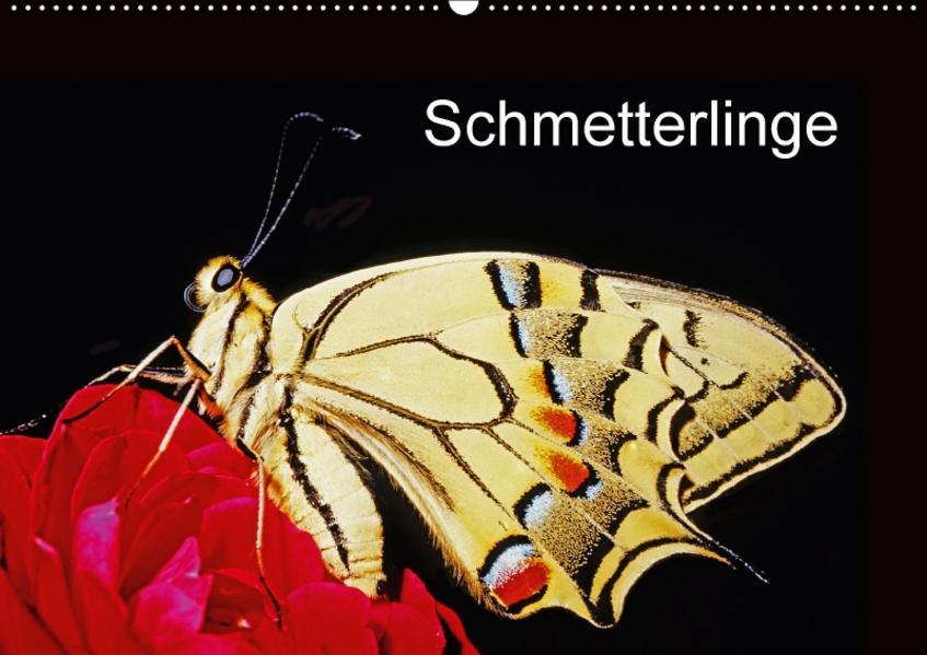 Schmetterlinge (Wandkalender 2017 DIN A2 quer) - Coverbild