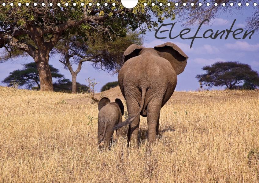 Elefanten (Wandkalender 2017 DIN A4 quer) - Coverbild