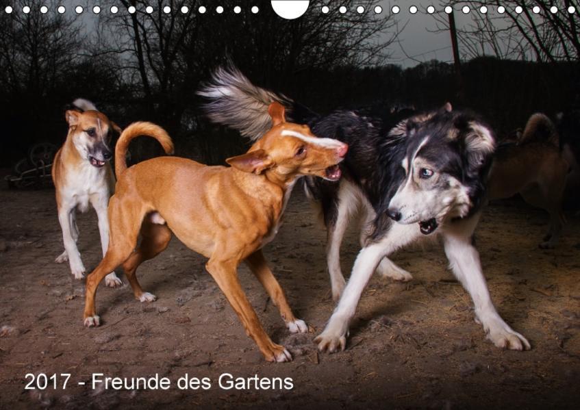 Freunde des Gartens (Wandkalender 2017 DIN A4 quer) - Coverbild