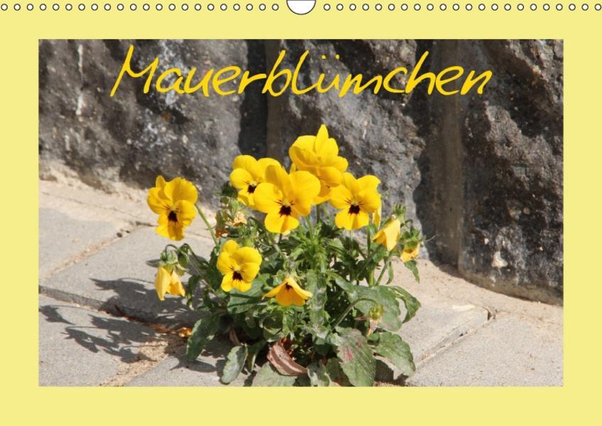 Mauerblümchen (Wandkalender 2017 DIN A3 quer) - Coverbild