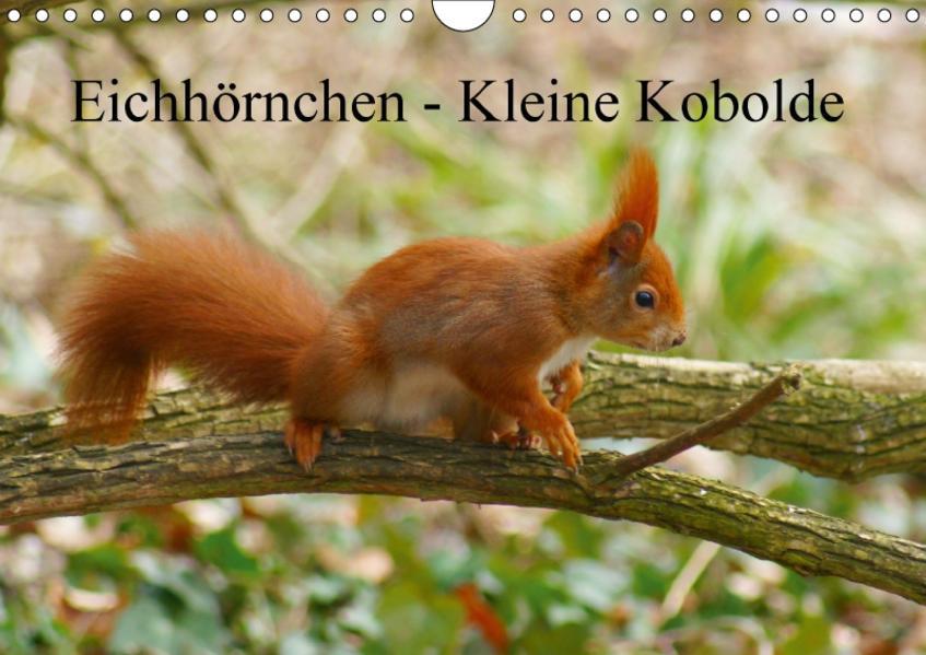 Eichhörnchen - Kleine Kobolde (Wandkalender 2017 DIN A4 quer) - Coverbild