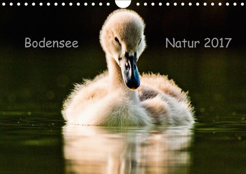 Bodensee Natur (Wandkalender 2017 DIN A4 quer) - Coverbild