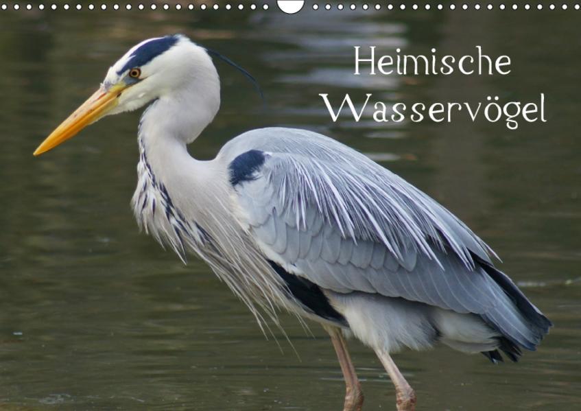 Heimische Wasservögel (Wandkalender 2017 DIN A3 quer) - Coverbild