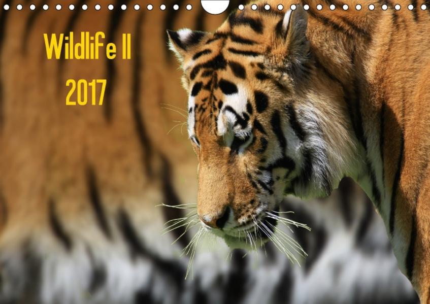 Wildlife II / 2017 (Wandkalender 2017 DIN A4 quer) - Coverbild